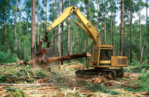 Figure 3 – Mechanical Timber Harvesting
